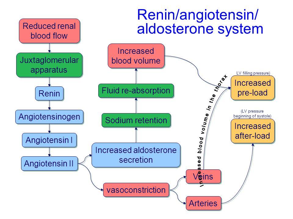 Renin Angiotensin System Flow Chart Frodofullring