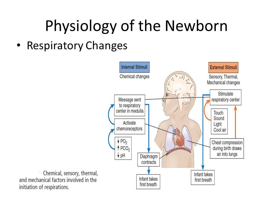 Physiology of the Newborn - ppt video online download