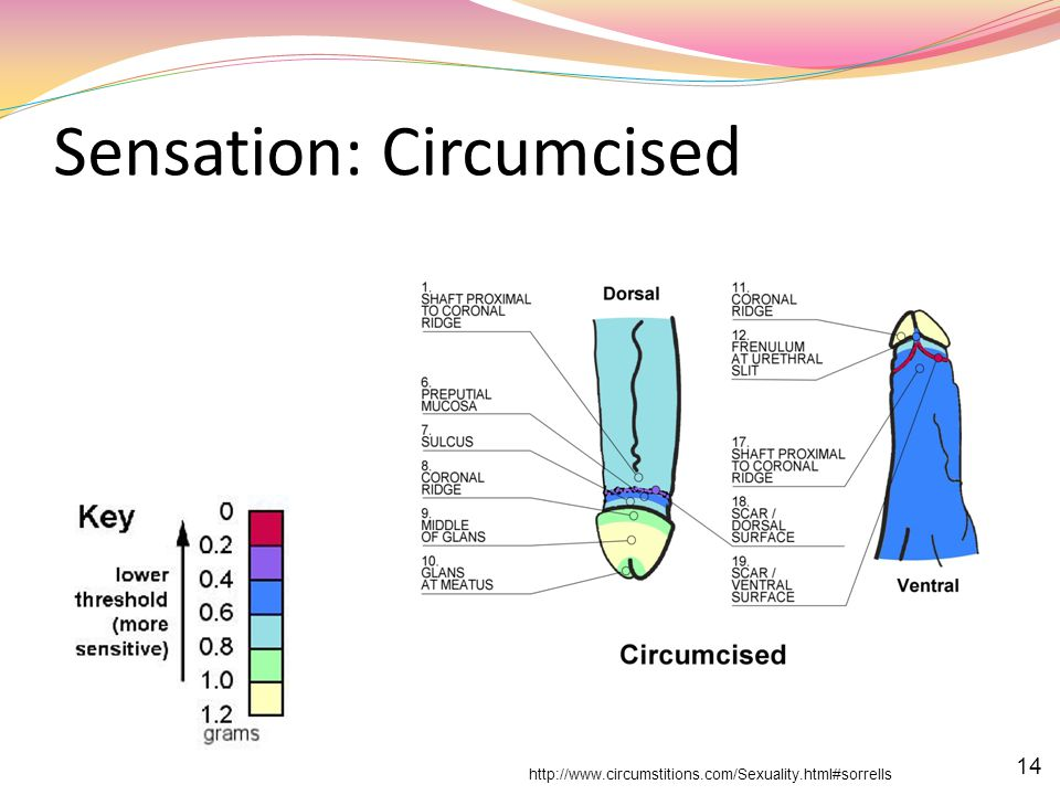 Sensation: Circumcised
