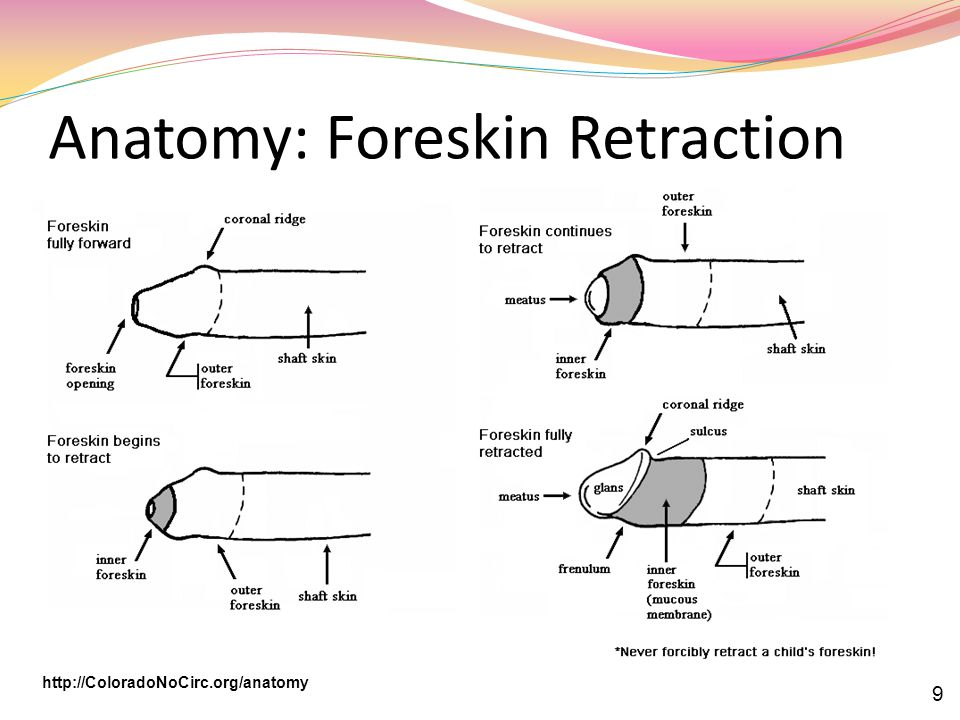 Anatomy: Foreskin Retraction