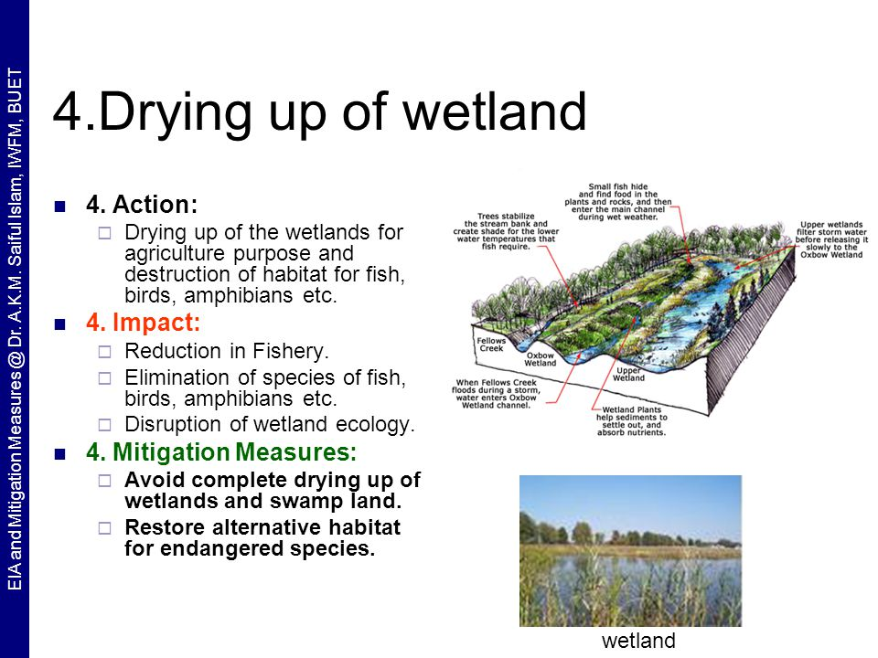 wetland ecology University of washington offers a certificate program in wetland science and wetland biologist  environmental planner, washington department of ecology.