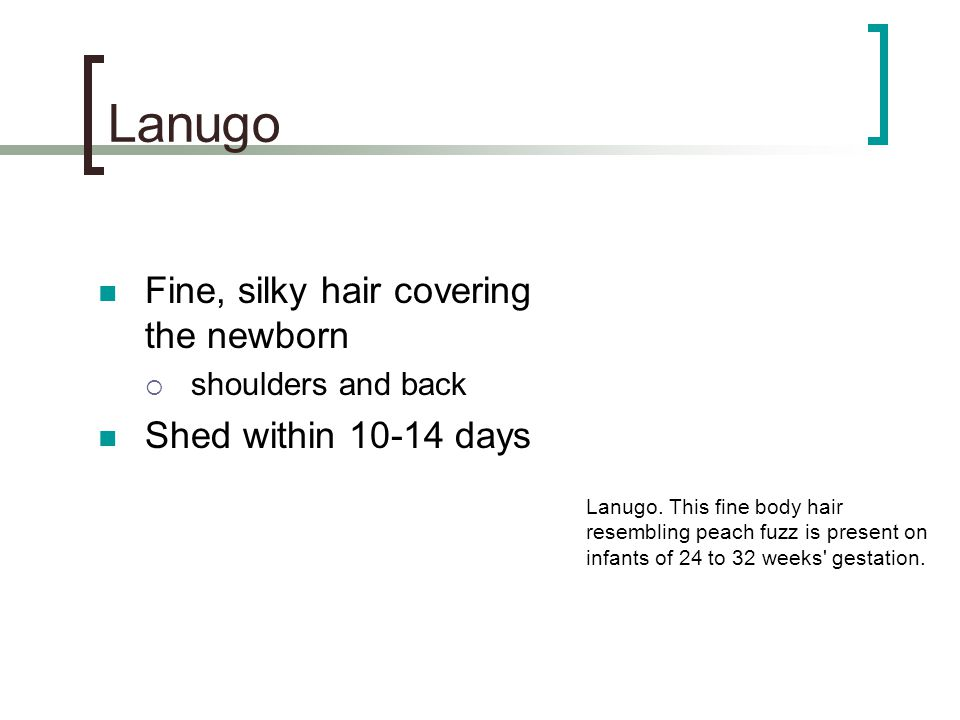 Lanugo Fine, silky hair covering the newborn Shed within 10-14 days