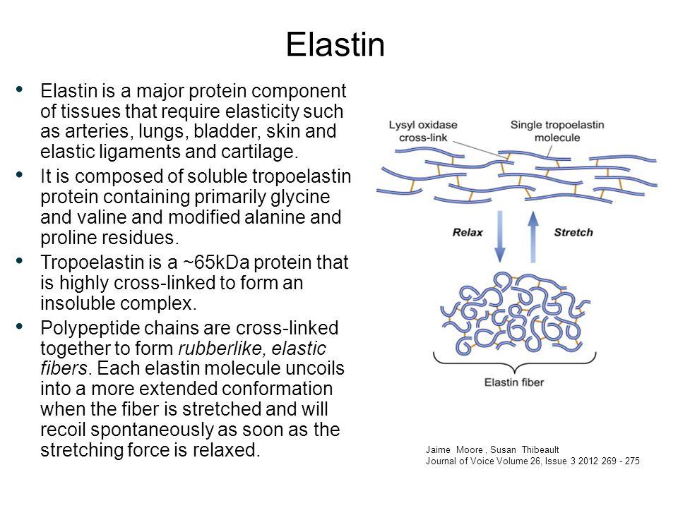 biochemistry of extracellular matrix