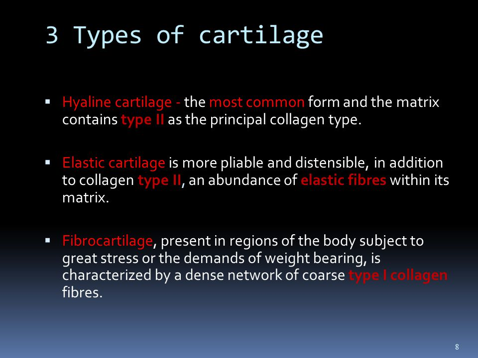 what type of cartilage forms the Collagen types 1 & 3 support skin, muscles, bones, and hair and nail growth and maintenance while type 2 supports cartilage and joints.