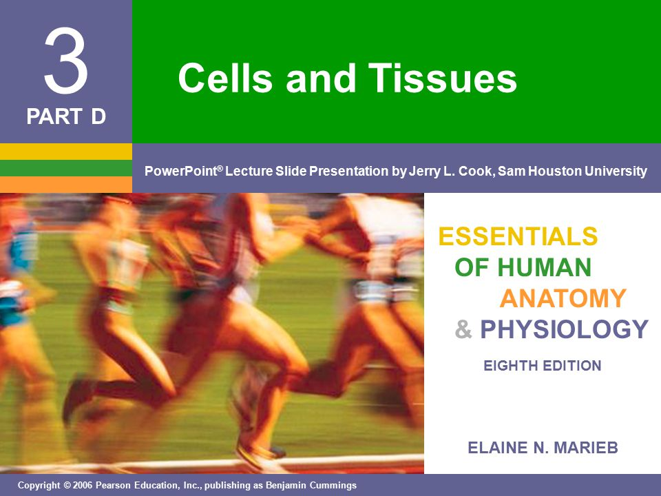 Cells And Tissues Ppt Video Online Download