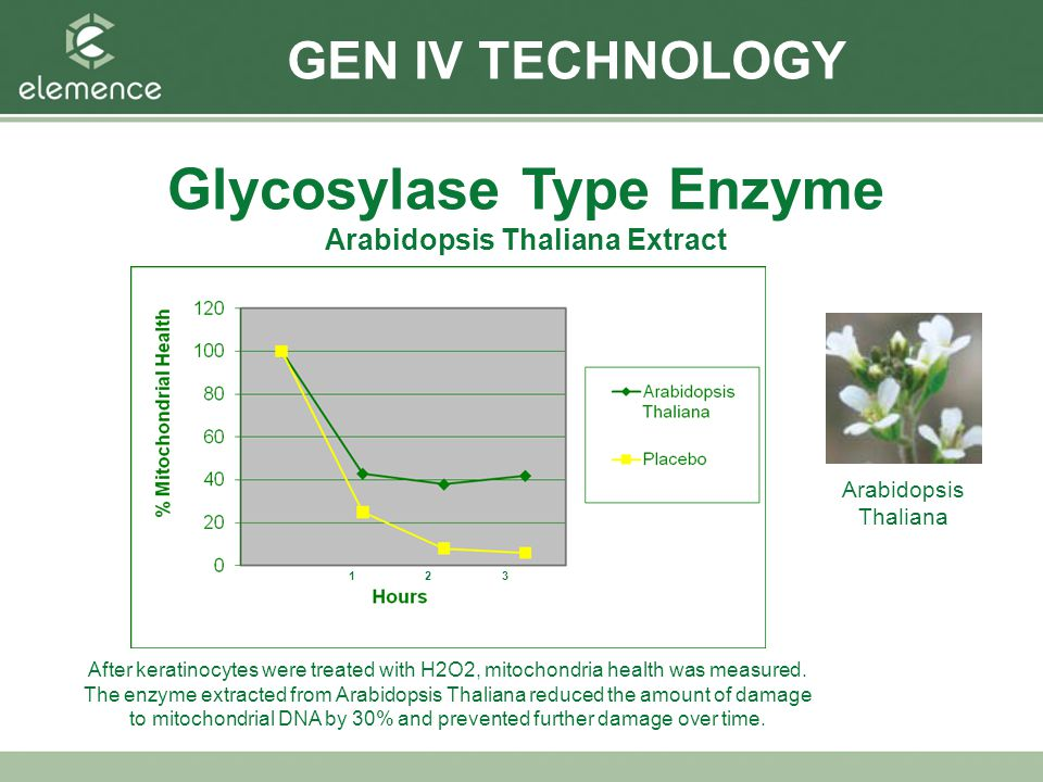 Glycosylase Type Enzyme Arabidopsis Thaliana Extract