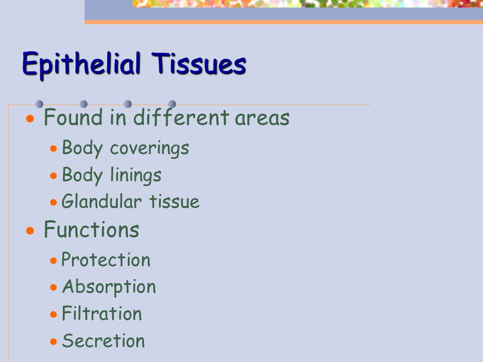 Epithelial Tissues Found in different areas Functions Body coverings