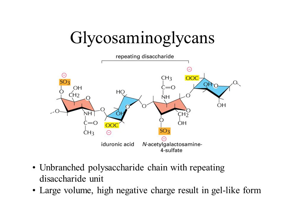 Glycosaminoglycans Unbranched polysaccharide chain with repeating disaccharide unit.