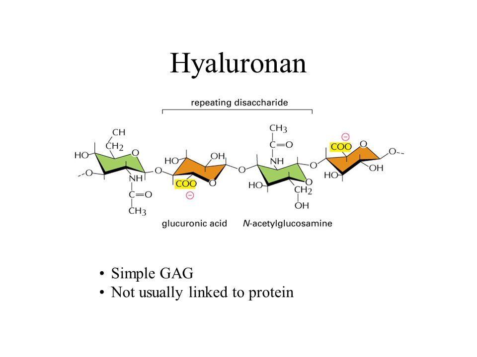 Hyaluronan Simple GAG Not usually linked to protein