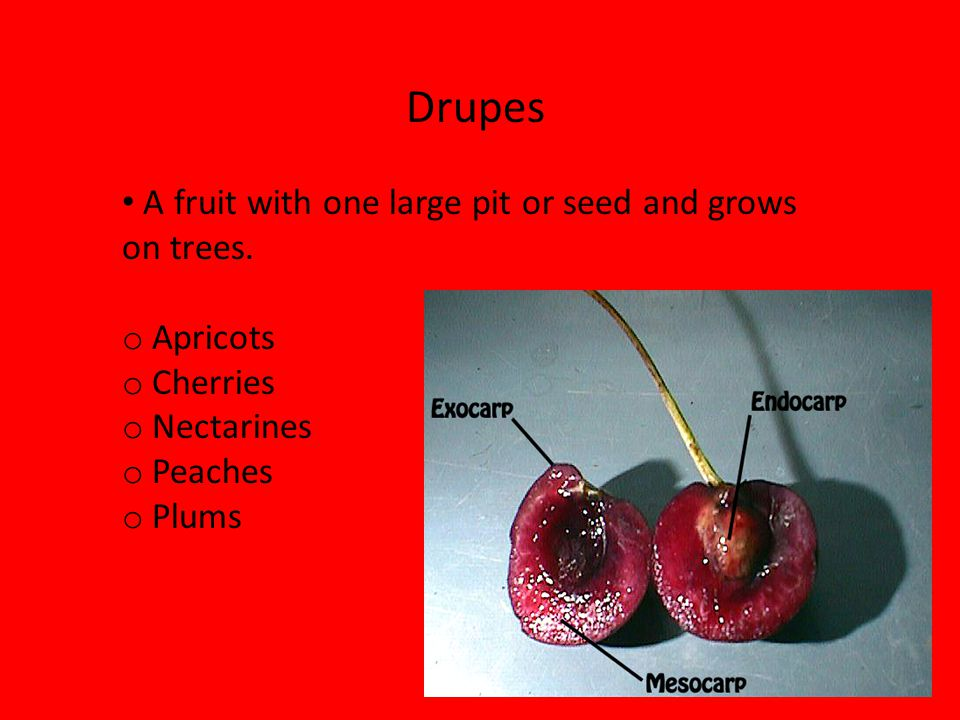 Drupes A fruit with one large pit or seed and grows on trees. Apricots