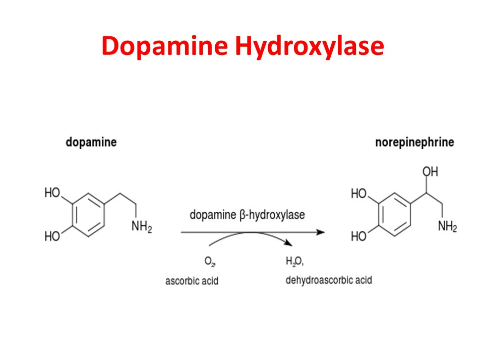 Dopamine Hydroxylase