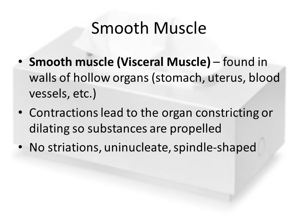 Smooth Muscle Smooth muscle (Visceral Muscle) – found in walls of hollow organs (stomach, uterus, blood vessels, etc.)