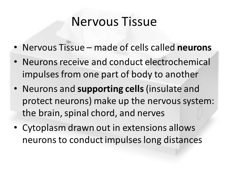 Nervous Tissue Nervous Tissue – made of cells called neurons