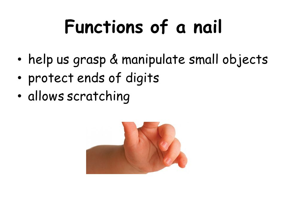 Amazing Three Functions Of Nails Festooning - Nail Paint Design ...