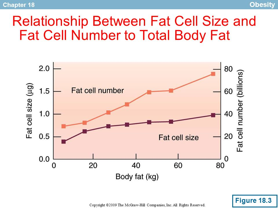describe the relationship between metabolic rate and body size