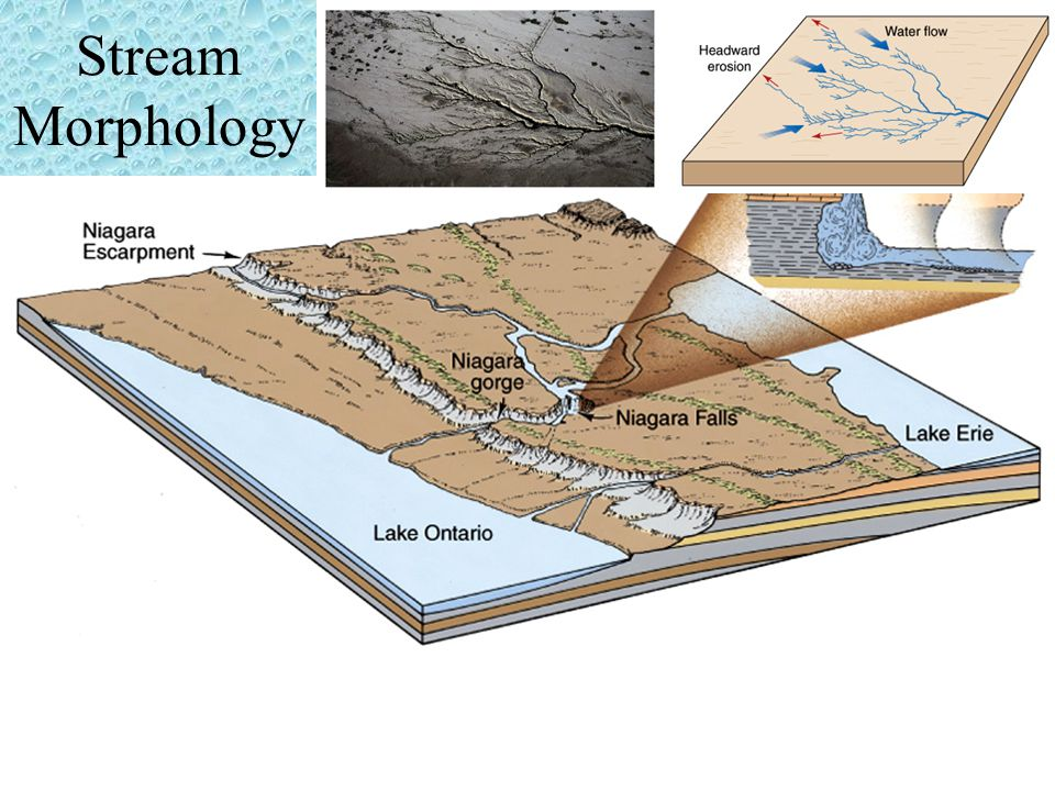 Stream Morphology Streams increase in length by headward erosion – erosion occurring at the beginning of the stream.
