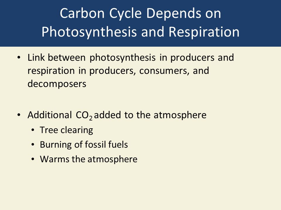 Carbon Cycle Depends on Photosynthesis and Respiration