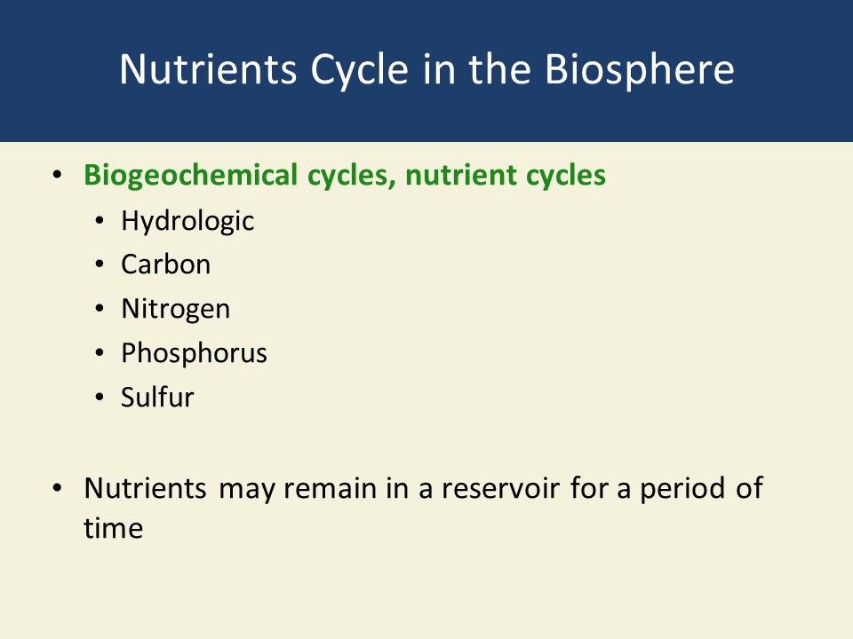 Nutrients Cycle in the Biosphere