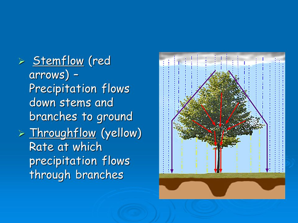Stemflow (red arrows) – Precipitation flows down stems and branches to ground