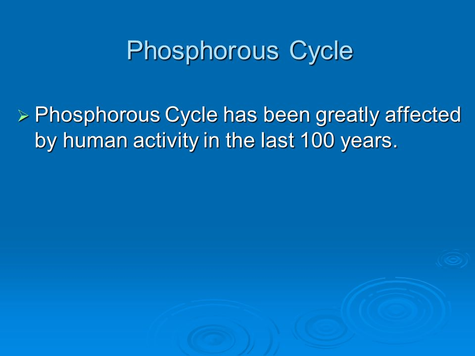 Phosphorous Cycle Phosphorous Cycle has been greatly affected by human activity in the last 100 years.