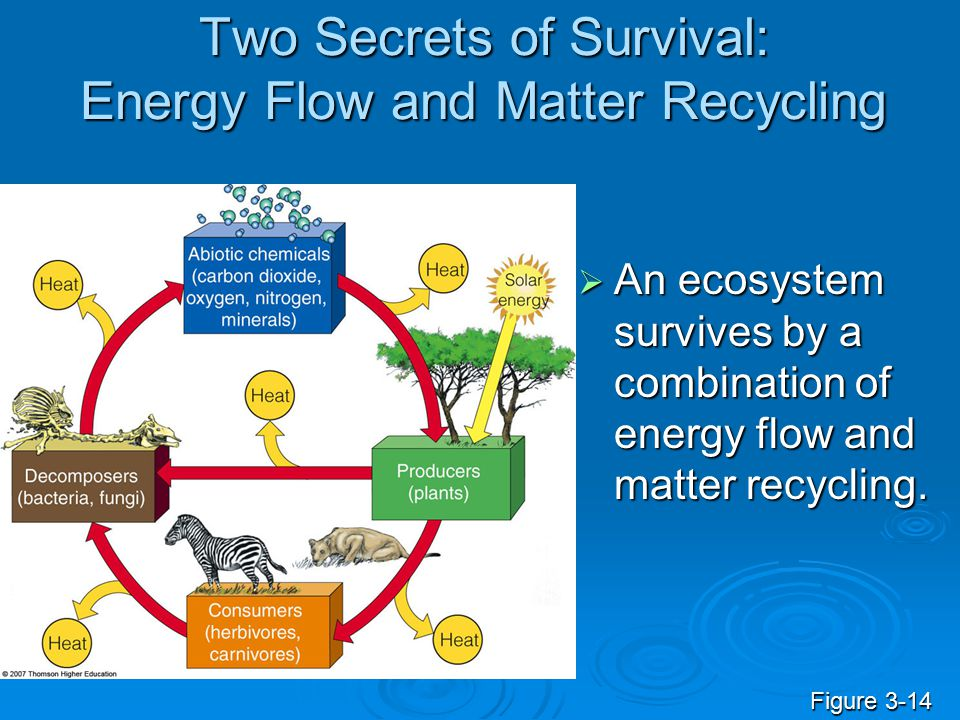 Two Secrets of Survival: Energy Flow and Matter Recycling