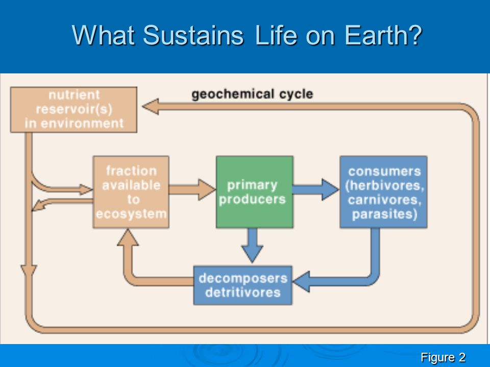 What Sustains Life on Earth