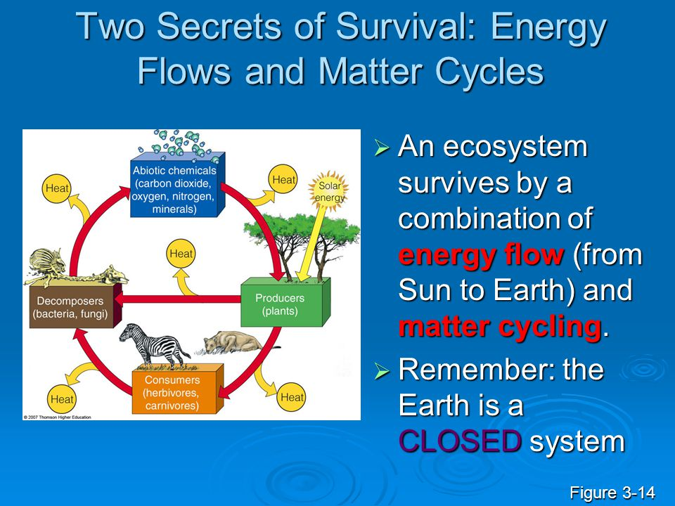 Two Secrets of Survival: Energy Flows and Matter Cycles