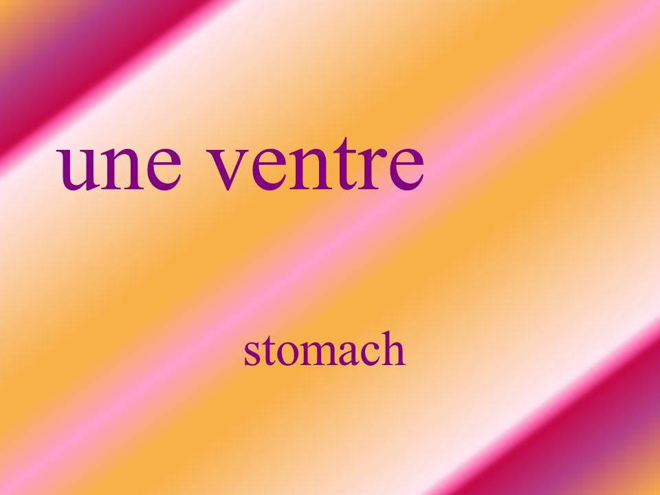 une ventre stomach