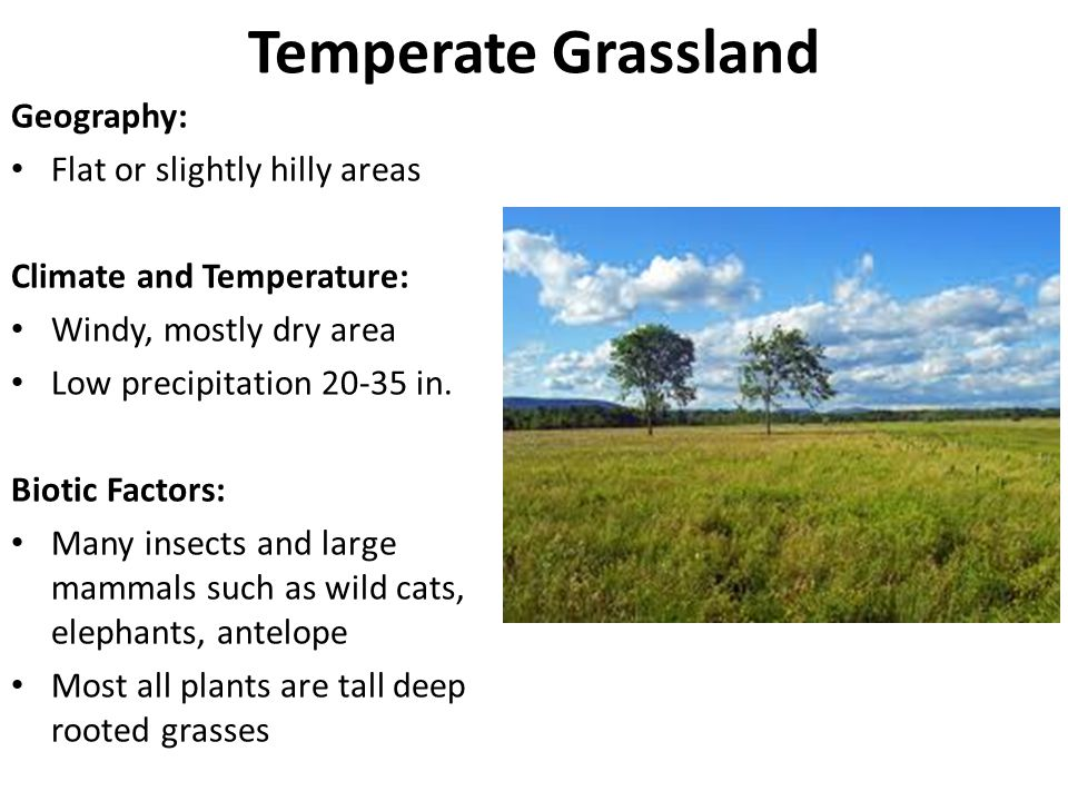 Temperate Grassland Geography: Flat or slightly hilly areas