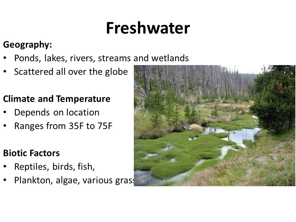 Freshwater Geography: Ponds, lakes, rivers, streams and wetlands