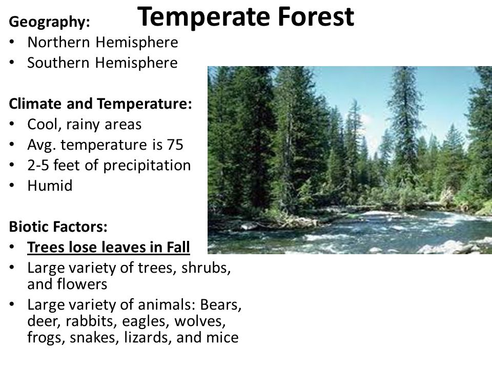Temperate Forest Geography: Northern Hemisphere Southern Hemisphere