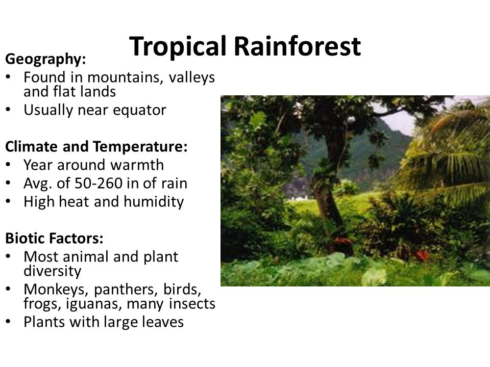 Tropical Rainforest Geography: