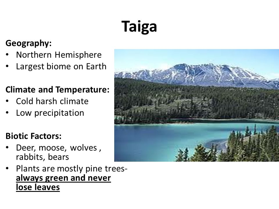 Taiga Geography: Northern Hemisphere Largest biome on Earth