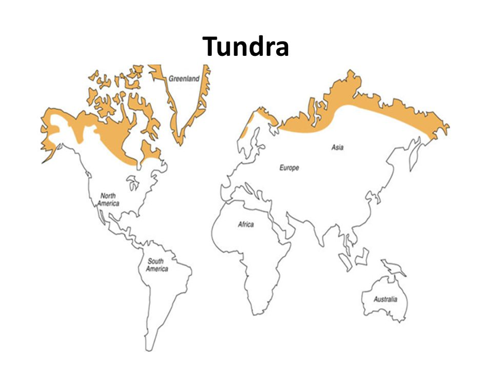 tundra biome landforms Transcript of tundra biome research tundras biome research location the tundra is located at the top of the world, near the north pole  on a smaller scale, polygonal features are.