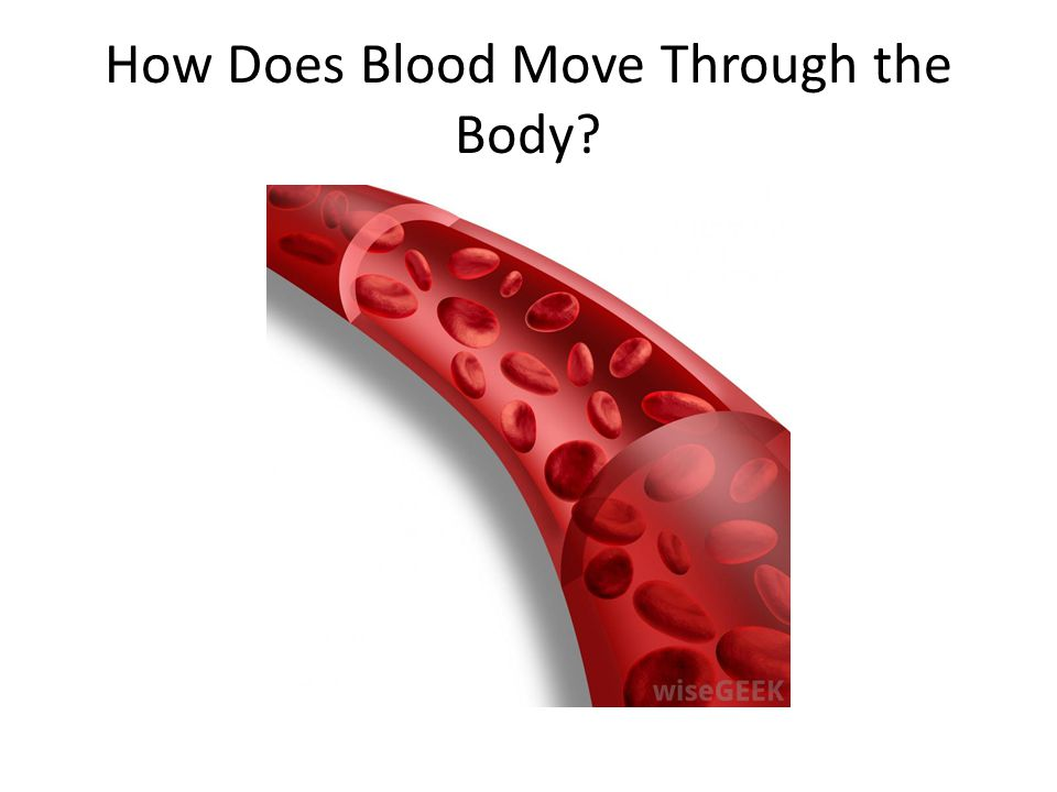 How Does Blood Move Through the Body