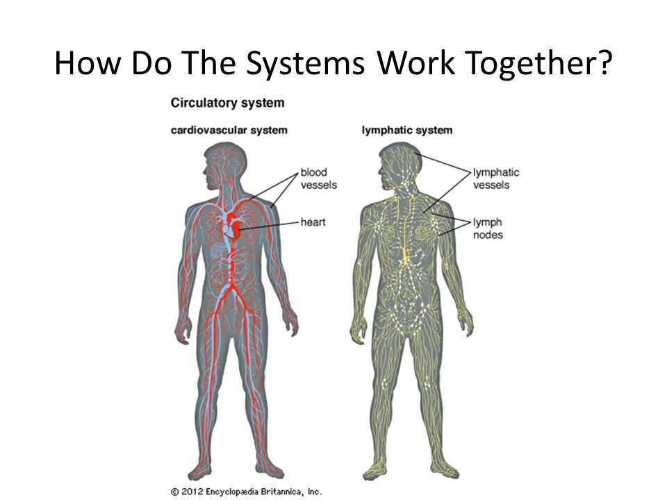 How Do The Systems Work Together