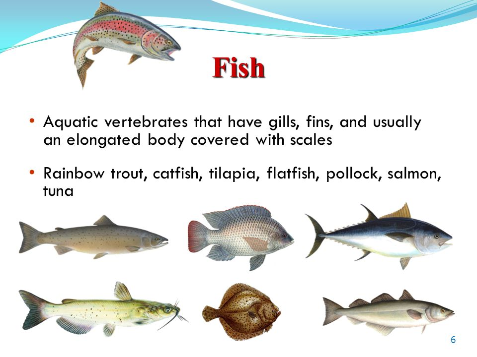 Seafood at its best what is seafood lesson 1 ppt download for List of fish with fins and scales
