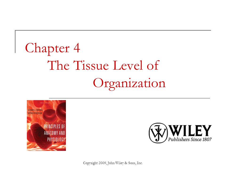 Chapter 4 The Tissue Level of Organization - ppt video online download