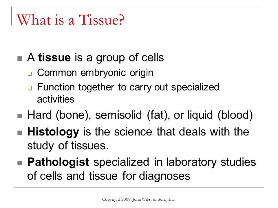 chapter 4 the tissue level of organization - ppt download, Cephalic Vein