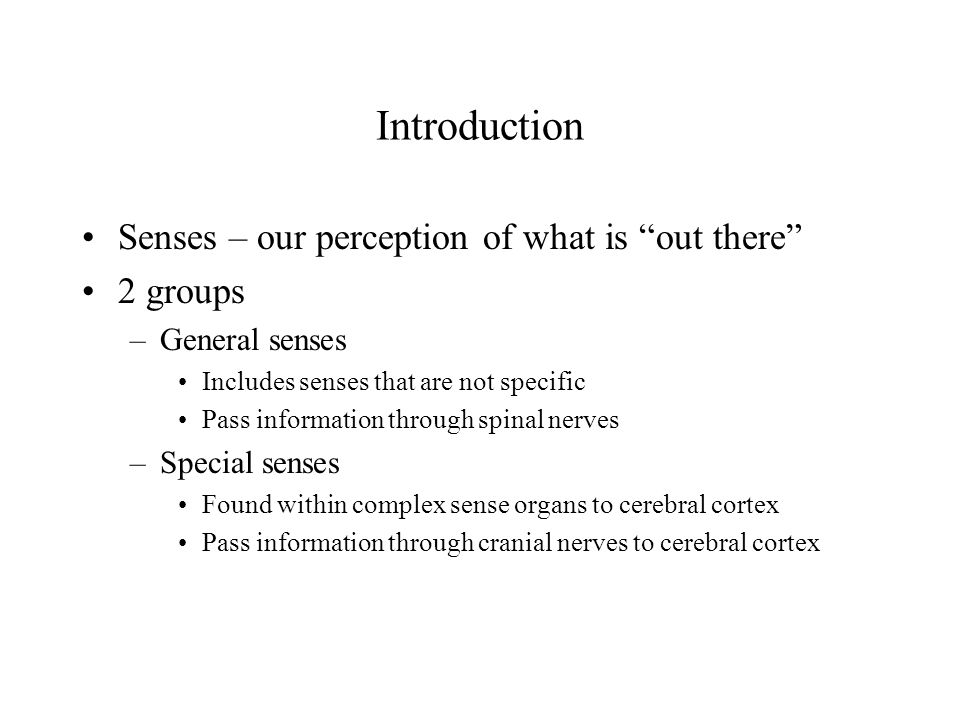 Introduction Senses – our perception of what is out there 2 groups