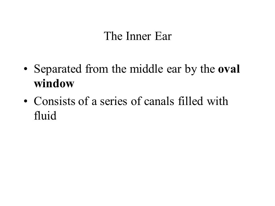 The Inner Ear Separated from the middle ear by the oval window.