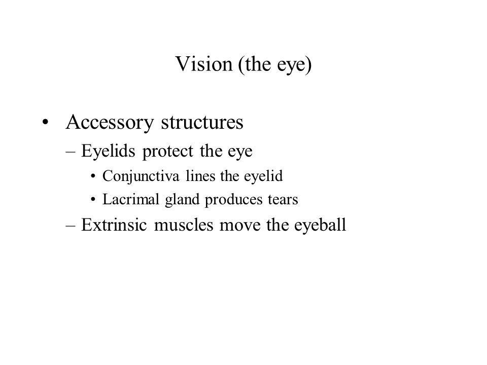 Vision (the eye) Accessory structures Eyelids protect the eye