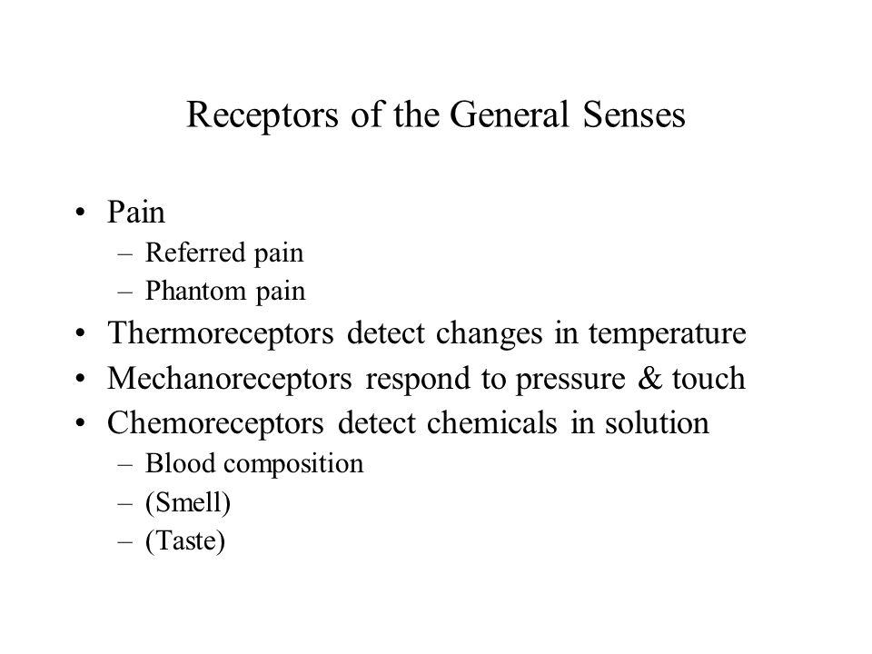 Receptors of the General Senses