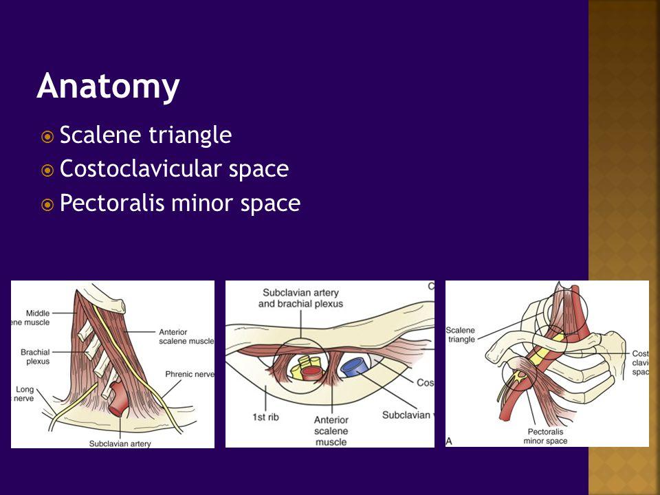 Scalene triangle anatomy