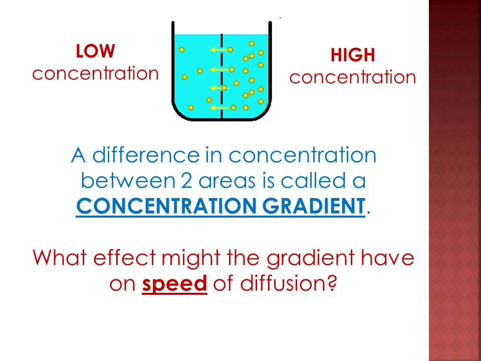 What effect might the gradient have on speed of diffusion