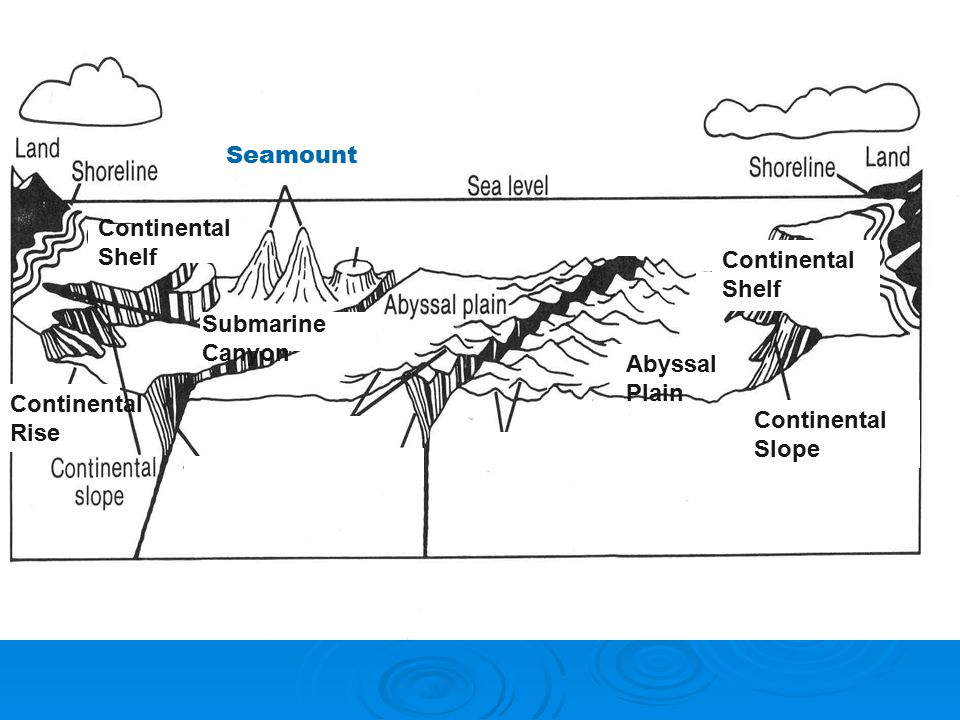 1 what is topography of the ocean ppt video online for Define guyot