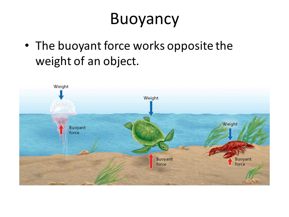 Buoyancy The buoyant force works opposite the weight of an object.