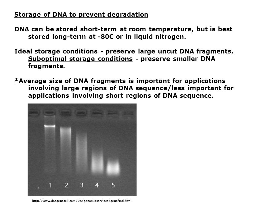 Restriction Enzymes Room Temperature