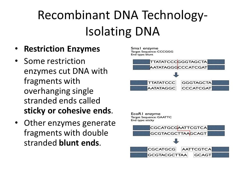 Recombinant DNA Technology- Isolating DNA
