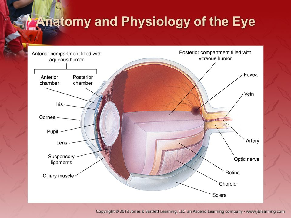 Diseases of the Eyes, Ears, Nose, and Throat - ppt download